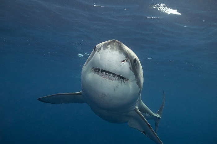 shark weekend su discovery channel