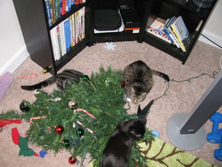cani gatti natale (12)