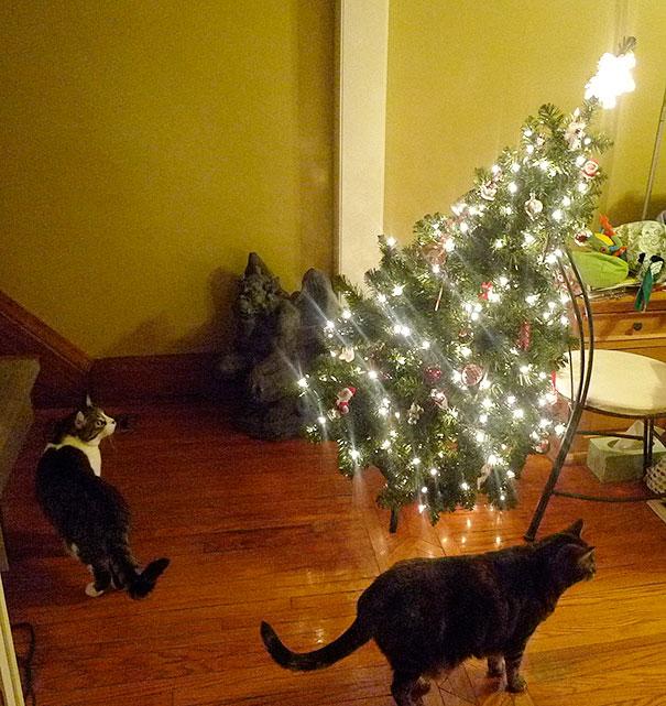 cani gatti natale (16)