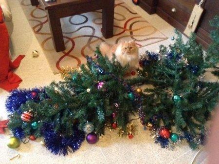 cani gatti natale (2)