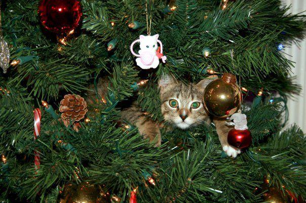 cani gatti natale (7)