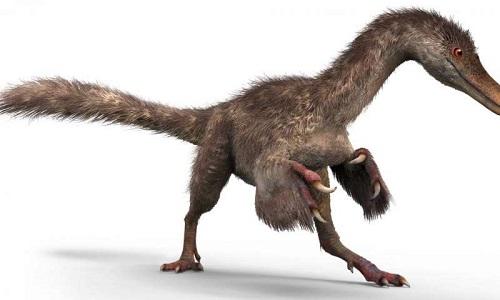 dinosauri piumati