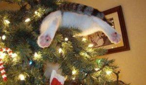 Cani e gatti vs albero di Natale: le foto più divertenti