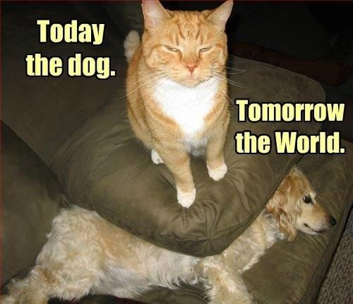 gatti intelligenti