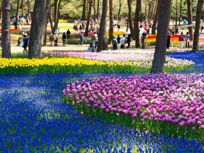 Hitachi Seaside Park, è in Giappone il paradiso dei fiori – FOTO