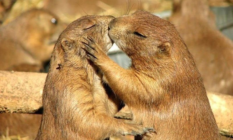 amori animali