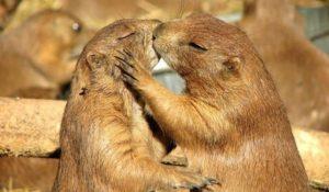 WWF: Giornata Mondiale della Biodiversità all'insegna del turismo sostenibile