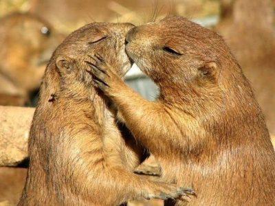"""50 Sfumature di sesso… animale! Il WWF racconta il San Valentino """"selvaggio"""" della natura"""