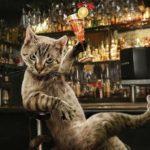 festa del gatto 17 febbraio