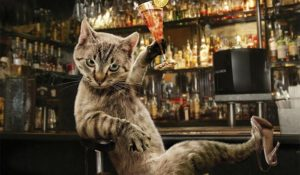 Oggi è la Festa del gatto! Storie e curiosità sul nostro amico felino