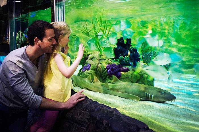 Festa del papà al Gardaland SEA LIFE Aquarium 2017