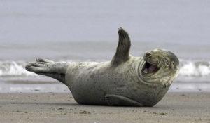 E' la Giornata Mondiale della Felicità: sorridi con gli animali più contenti del mondo