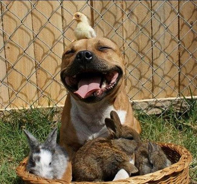 animali-felici-giornata-mondiale-felicita