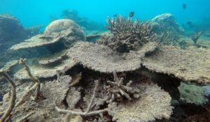 La Grande Barriera Corallina è morta, un solo colpevole l'uomo