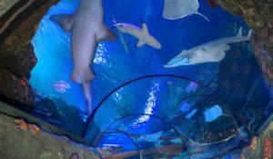 Un angolo di Amazzonia a Gardaland SEA LIFE Aquarium