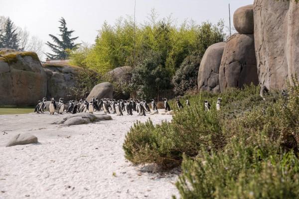 habitat per pinguini
