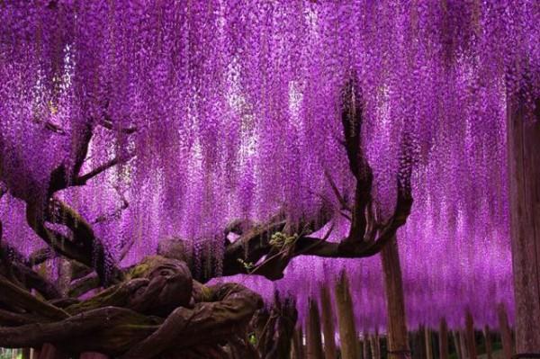 albero-della-vita-giappone-1-e1451868585353