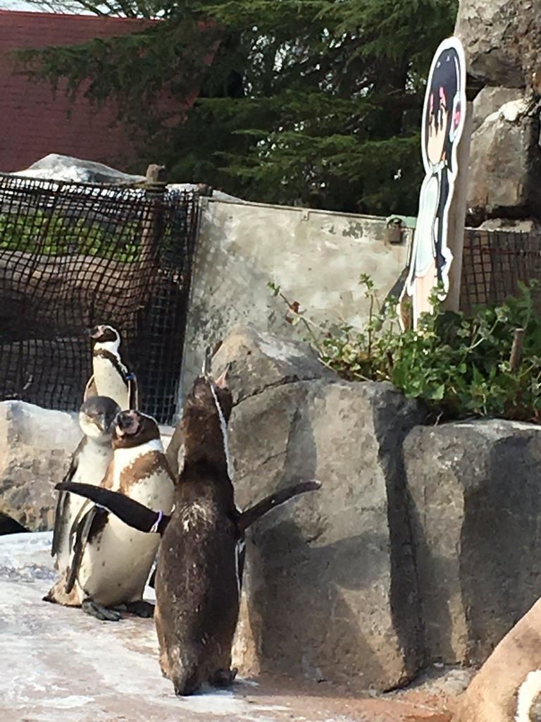 Célèbre Addio Grape-kun! E' morto il pinguino innamorato di un cartone animato RO07