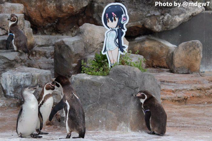 Connu Addio Grape-kun! E' morto il pinguino innamorato di un cartone animato ZP09