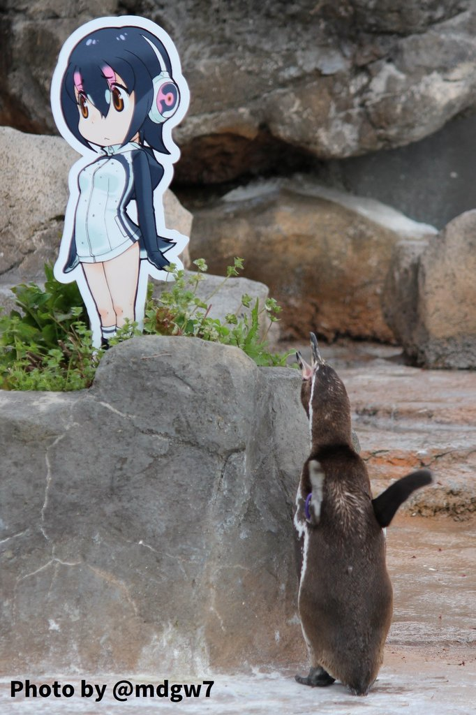 Célèbre Addio Grape-kun! E' morto il pinguino innamorato di un cartone animato VO08