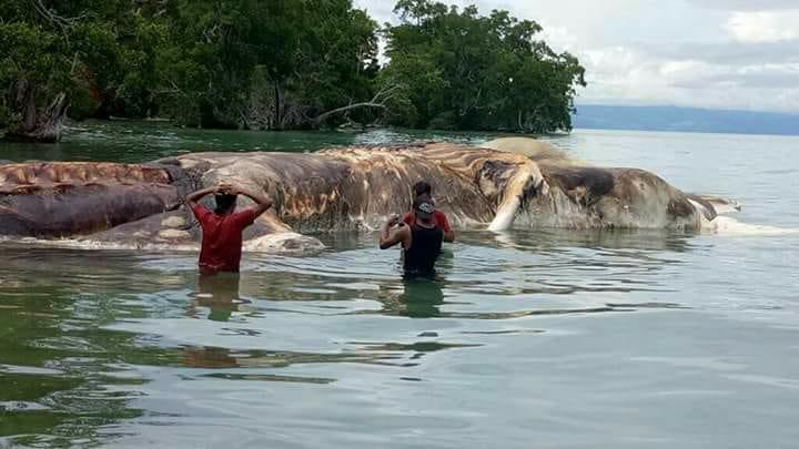 creatura marina gigante (1)