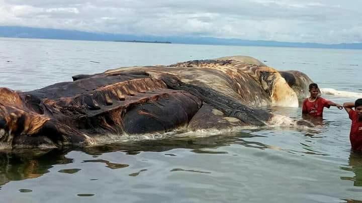 creatura marina gigante (2)