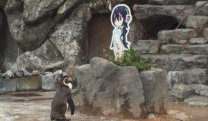 Giappone, la strana storia del pinguino innamorato di un cartone animato