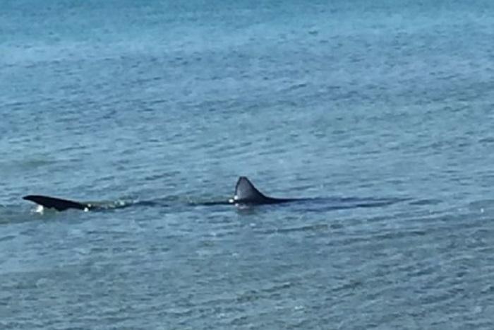 squalo avvistato a gallipoli