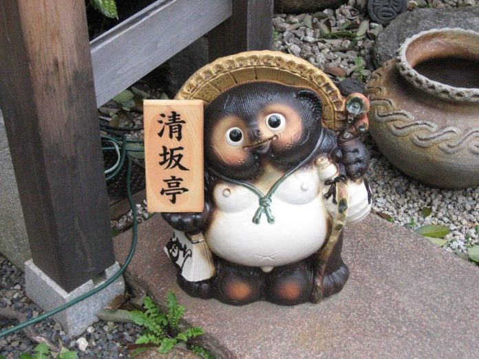 cane procione tanuki