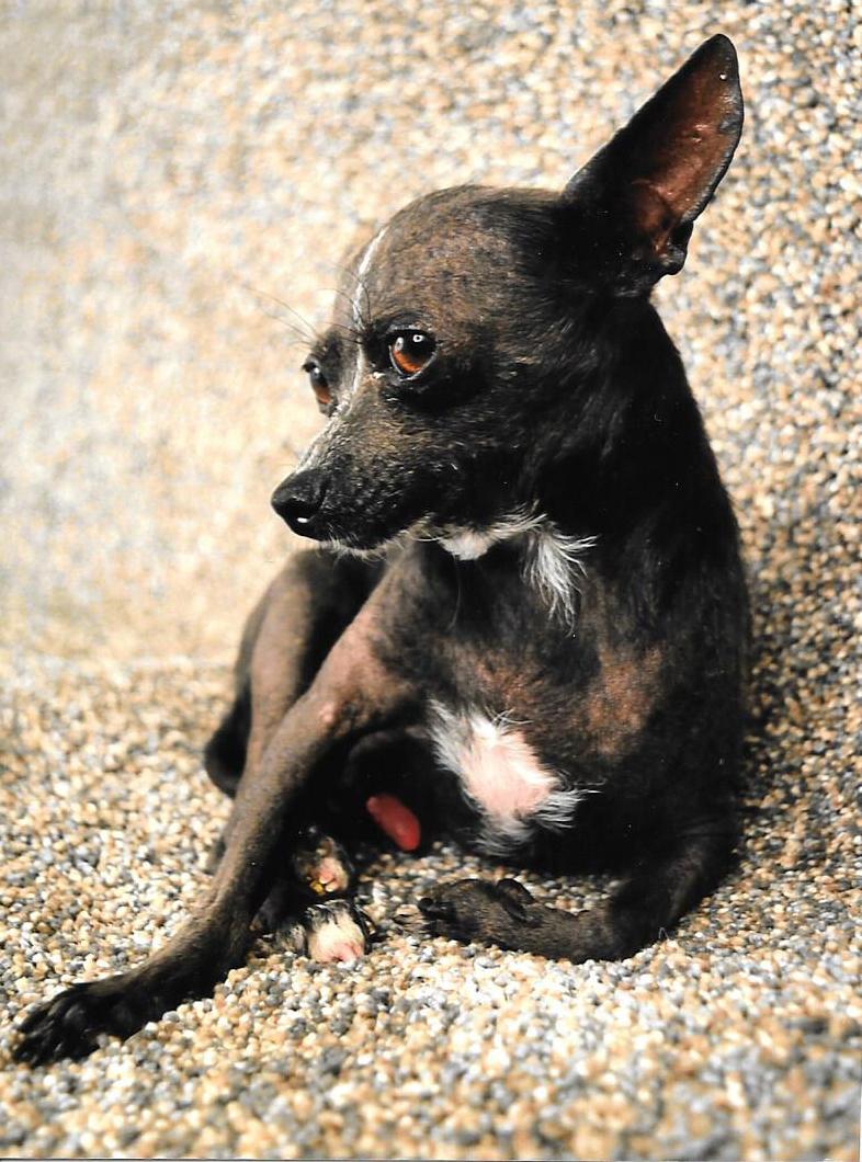 Cane più brutto del mondo