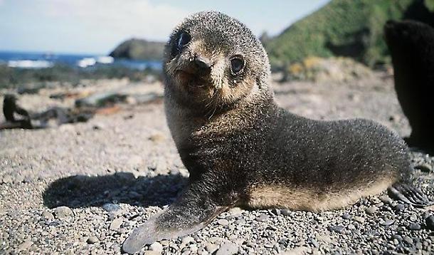 foca monaca (4)