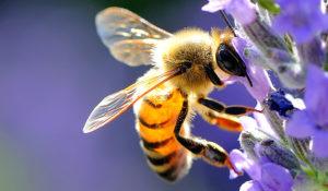 Cosa fare in caso di punture di api, vespe e calabroni e come evitarle