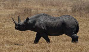 Segnali di speranza per i rinoceronti del Sud Africa