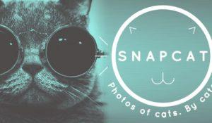 Le app inutili del PlayStore, dal monitoraggio della cacca ai selfie dei gatti