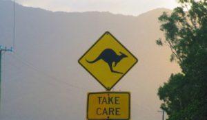 Le auto a guida autonoma non riconoscono i canguri. Australia penalizzata