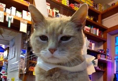 Stubbs gatto sindaco