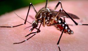 Combattere le zanzare con le zanzare, la nuova sfida di Google. Il video