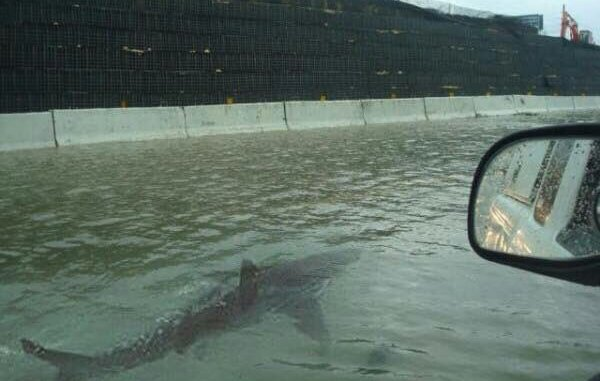 squali nell'uragano Irma