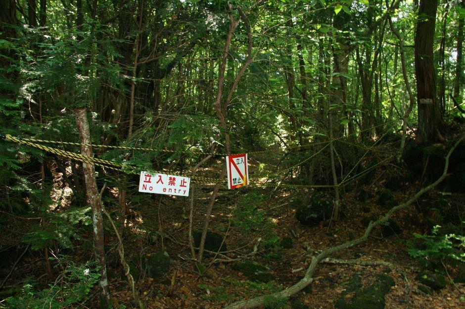 foresta dei suicidi (1)