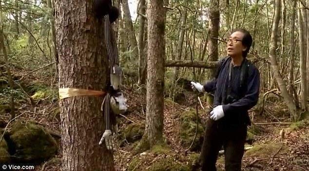 foresta dei suicidi (3)