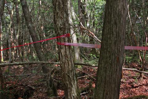 foresta dei suicidi (4)