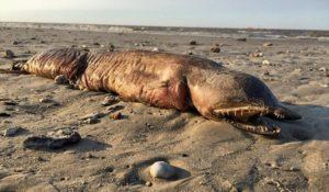 Uragano Harwey mostro marino in Texas. Le foto della strana creatura