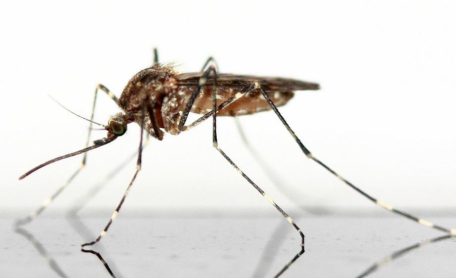 emoji zanzara