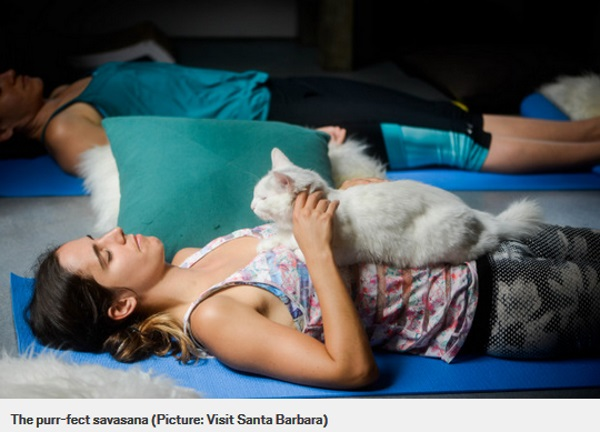 Cat Therapy, yoga (2)