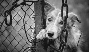 California, animali in vendita nei negozi solo se provenienti dai rifugi. La legge rivoluzionaria