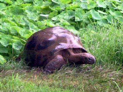 jonathan tartaruga più vecchia del mondo
