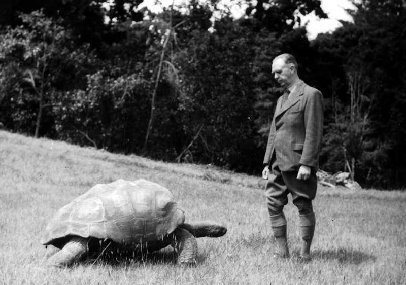 tartaruga vecchia (1)