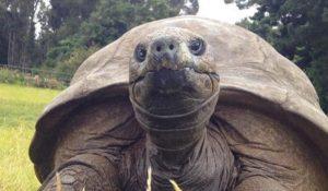 La tartaruga più vecchia del mondo è gay