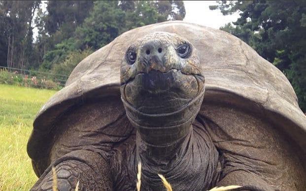 tartaruga vecchia (2)