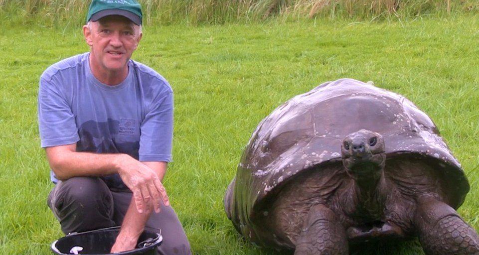 tartaruga vecchia (3)